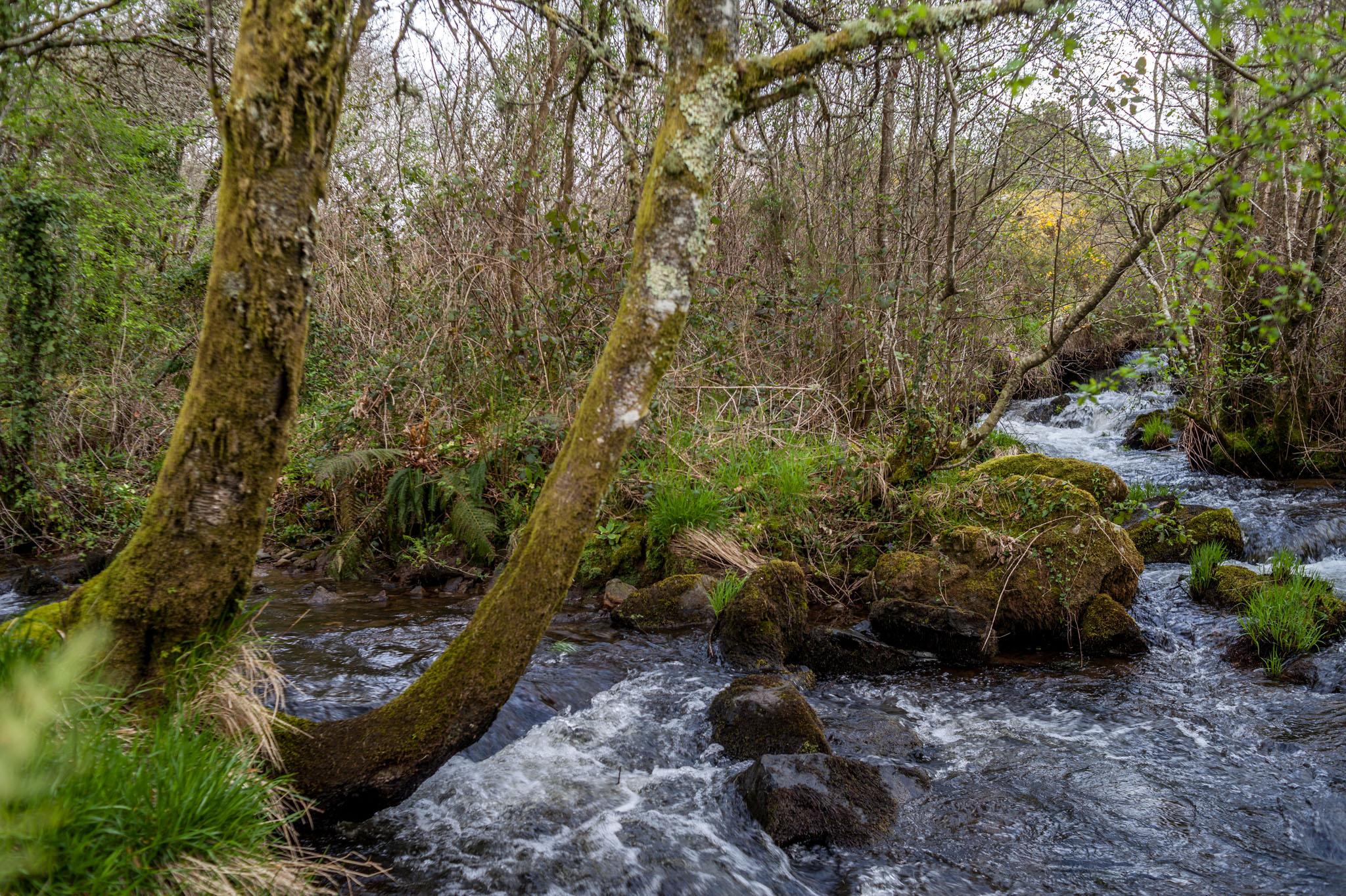Formación do Río Furelos