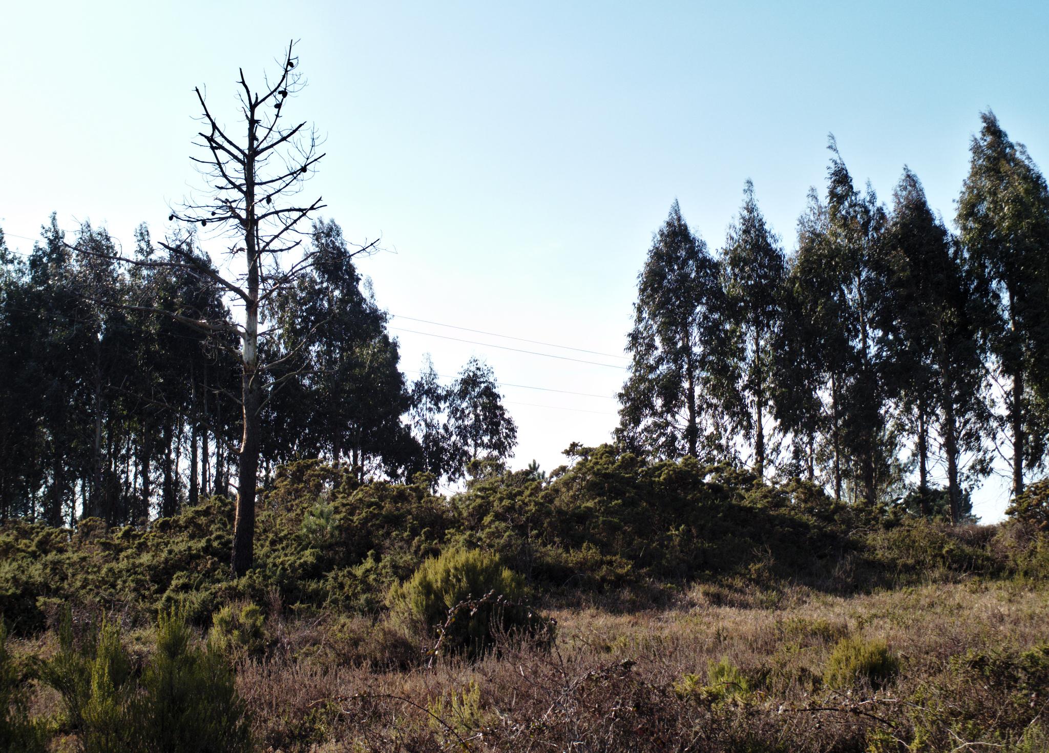 Mámoa 1 da necrópole de Monte Grande ou do Grupo Richinol.